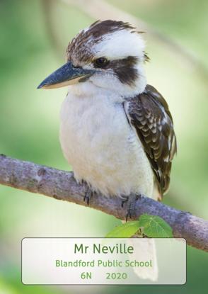 Kookaburra - Front Cover