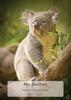 Koala - Front Cover