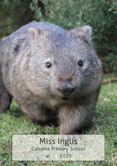 Wombat - Front Cover