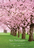 Cherry Blossom Park - Front Cover