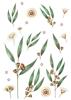 Back Cover - Eucalyptus